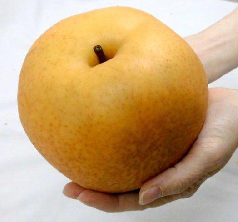 애탕 열매