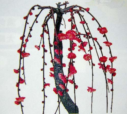 수양홍매화