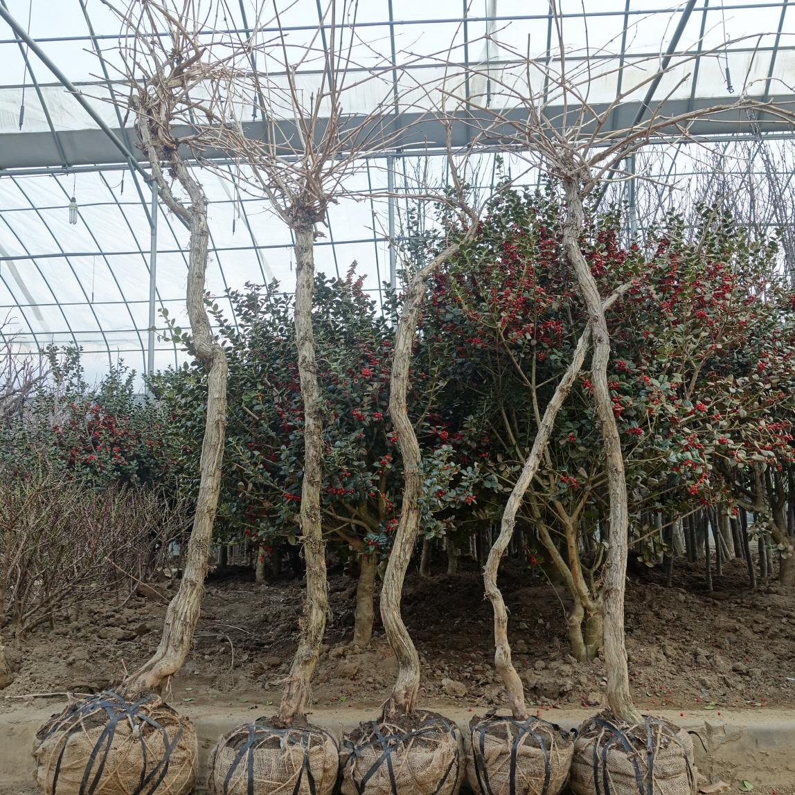 능소화 특수목